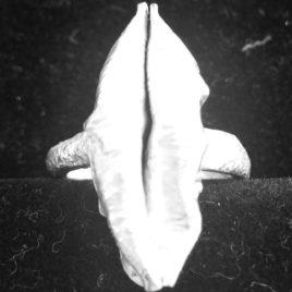 paula-schnapp-anel-dali